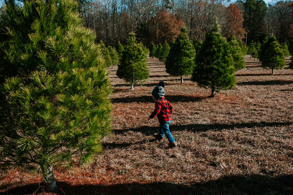 little boy running in between Christmas trees