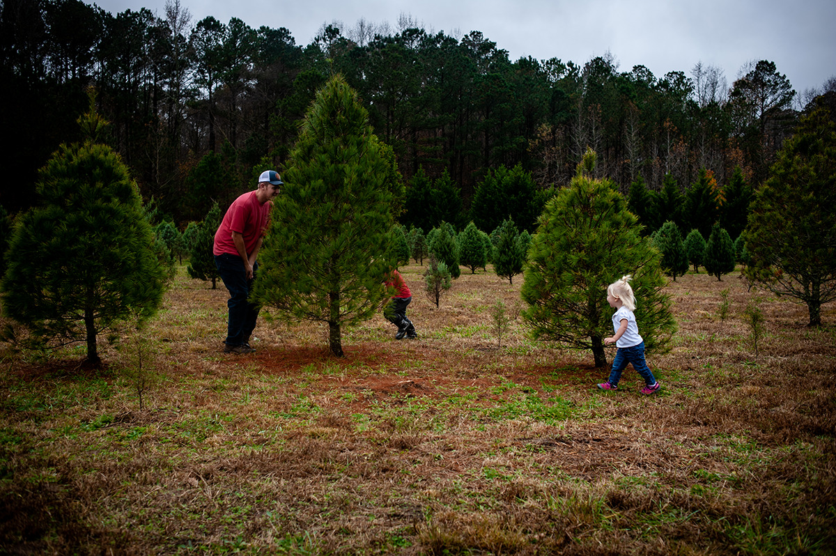 playing hide and seek at Christmas tree farm