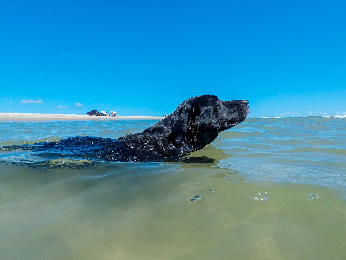 Dog swimming at beach in Avon